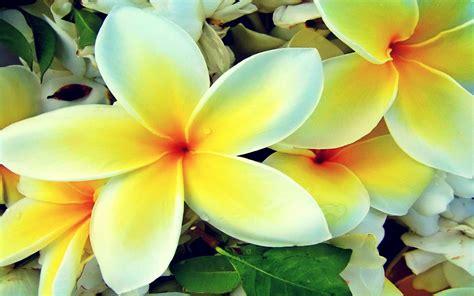 Hawaiian Flowers by Hawaiian Flowers Wallpaper