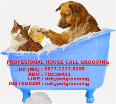 Sho Kucing Anti Kutu Dan Jamur profesional house call salon and grooming grooming anjing