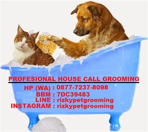 Harga Sho Anti Kutu Dan Jamur Kucing profesional house call salon and grooming grooming anjing