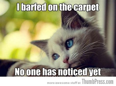 Sad Kitten Meme - sad cat meme