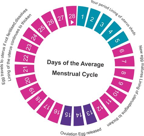 Ovulation Calendar Pregnancy Calculator Ovulation Calculator Fertility Calculator Find Your