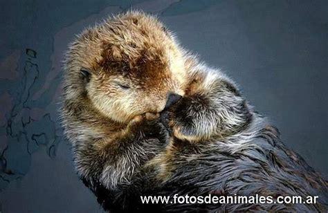 imagenes animales durmiendo fotos de animales durmiendo
