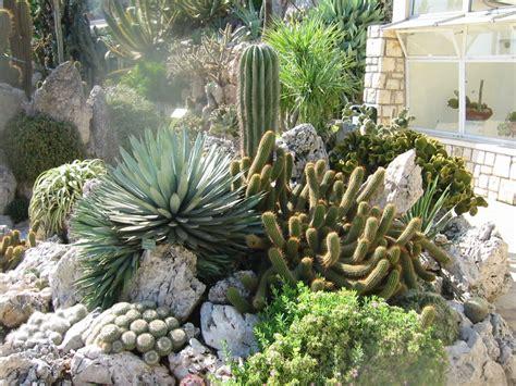 imagenes de jardines con cactus arte y jardiner 205 a los cuidados correctos de los cactus