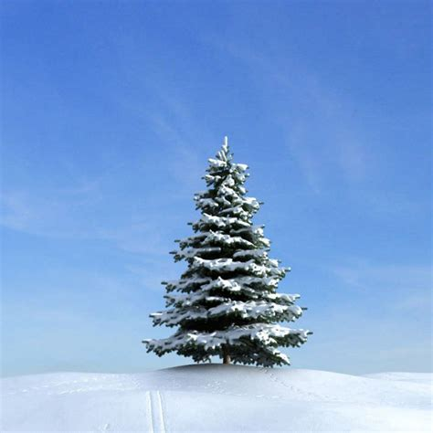 tree in snow snow covered pine tree 3d model cgtrader