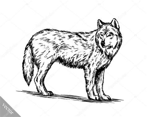 imagenes en blanco y negro de lobos blanco y negro graba lobo aislado vector de stock