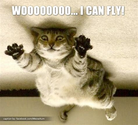 Flying Cat Meme - supercat i can fly meow aum