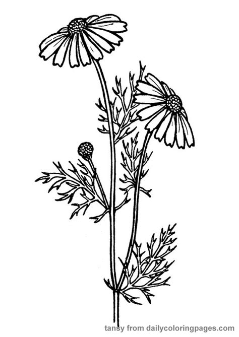 realistic flower coloring page realistic flower coloring pages flower coloring page