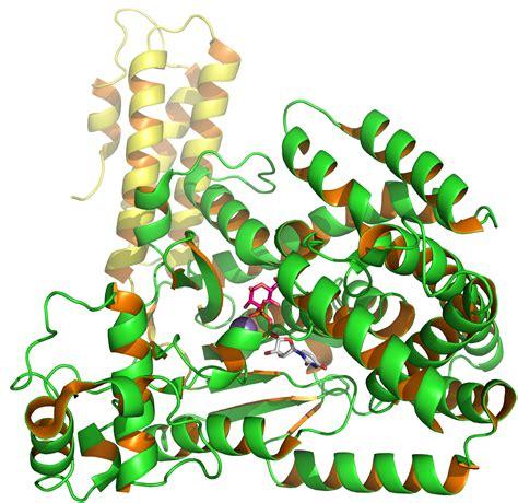 clostridium difficile toxin b