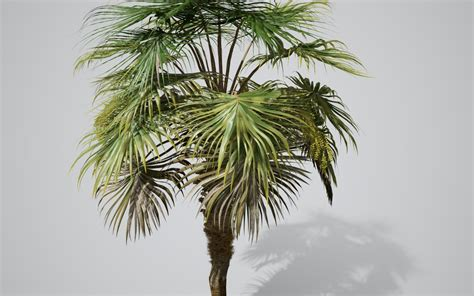 palm tree fan blades chinese fan palm species pack speedtree