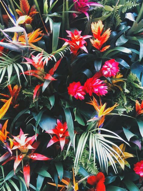 tumblr wallpaper tropical tropical print background tumblr www imgkid com the