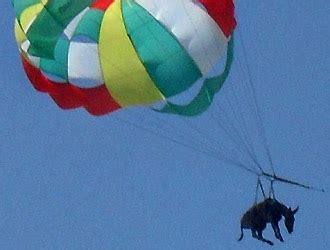 asino volante morto per infarto asino obbligato a volare col paracadute