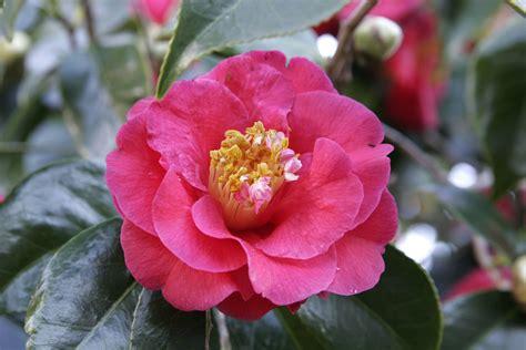 state flowers list list of u s state flowers