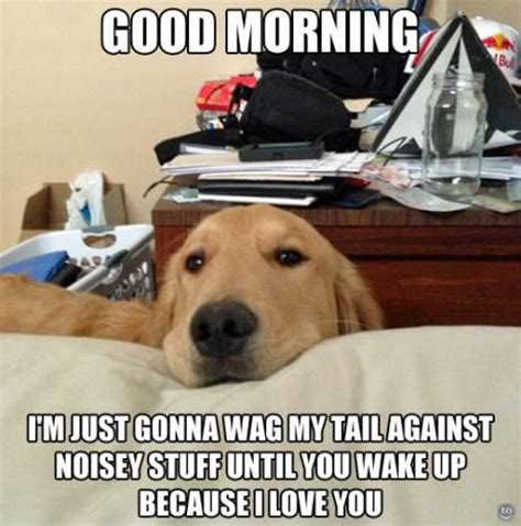 by good morning golden retriever good morning dog meme slapcaption com my best friend