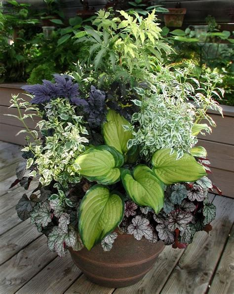 Shade Container Gardening Ideas Great Combo For Shade Plant Combination Ideas For Container Gardens
