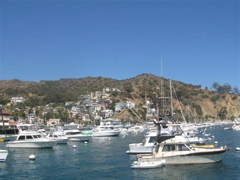 boats to catalina from newport beach all about newport beach activities in newport beach