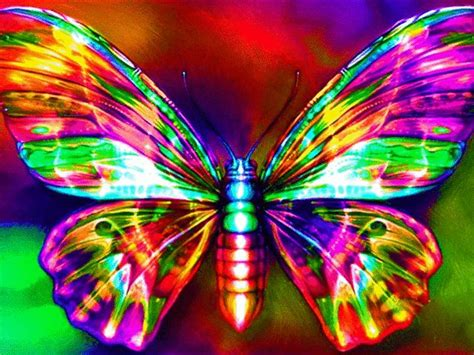 butterfly colors neon butterfly colors galore 2 rainbows