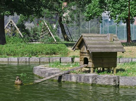 Duck Sheds by Top 3 Accessories For Keeping Ducks Ebay