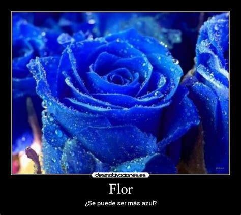 imagenes de rosas azules con frases de amor im 225 genes con fraces de amor y rosas azules imagui