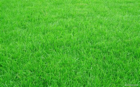 wallpaper background grass grass background wallpaper 1680x1050 53348