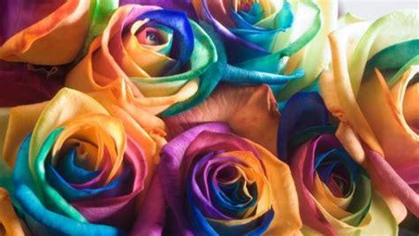 foto fiori coloratissimi rainbow roses il mazzo di ora 232 arcobaleno