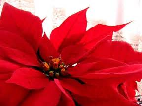 Home Decor Sweepstakes december birth flower poinsettia proflowers blog