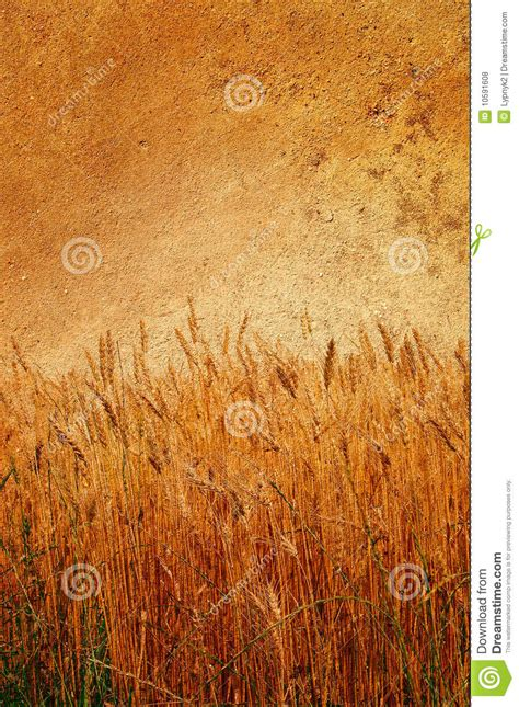 wonderful wall and ripe wheat pasted on it stock photo cartoondealer 10591608