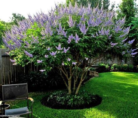try these summer blooming trees louisiana blooms