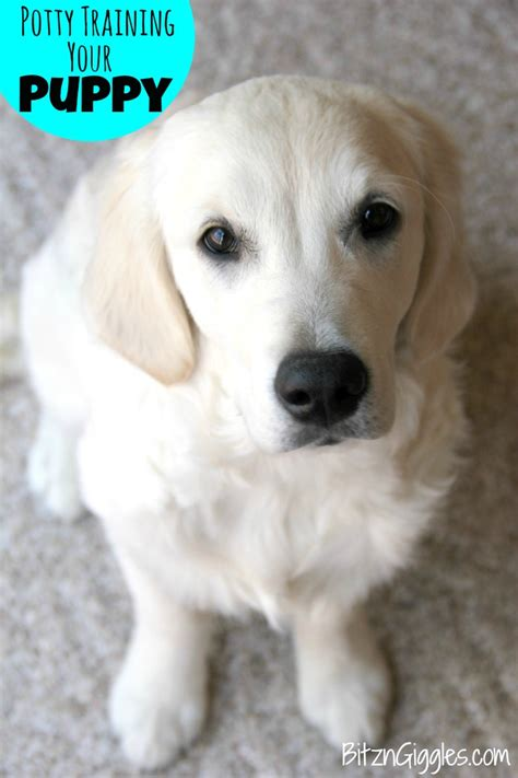 puppy potty tips best method for aggressive dogs