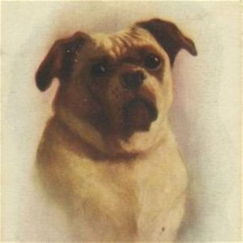 history of pug dogs pug world history