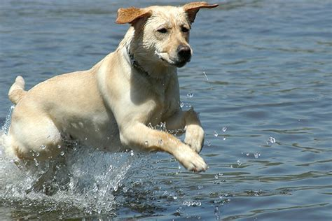 healthy dogs cancer in dogs cancer diet info caninecancerdiet