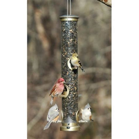 cleaning bird feeders