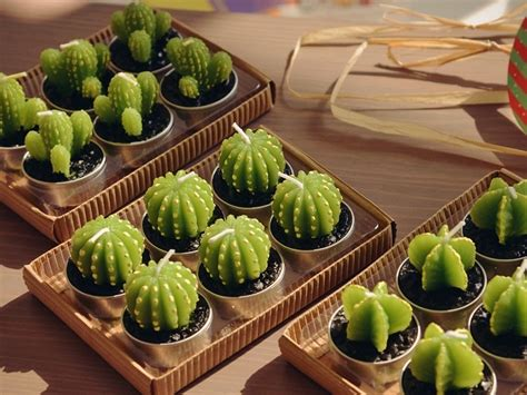 cara membuat lu hias gantung gambar tanaman hias pohon kaktus mini jenis tanaman terbaru