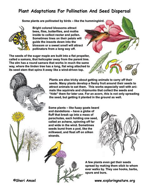 pollination diagram pollination and seed dispersal adaptations