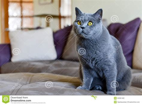 cat sitting on couch cat in living room stock photo image 55381402