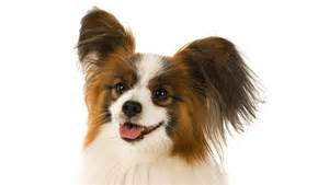 small breeds the cutest small dogs