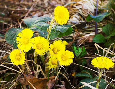 Common Backyard Plants by Get Acquainted With 5 Common Backyard Weeds With