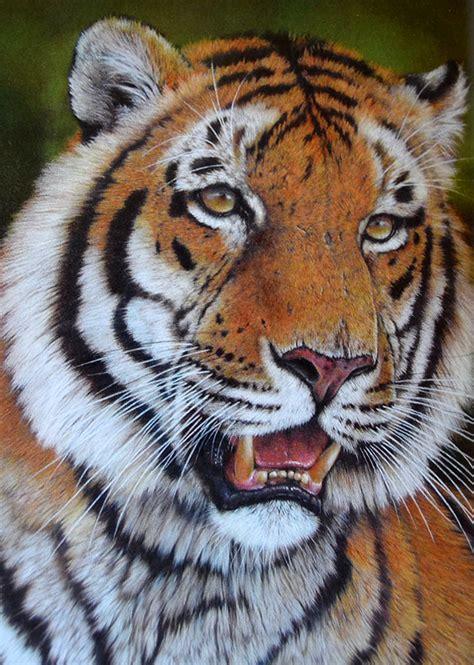 imagenes de leones y gatos pintar a los felinos gatos panteras tigres y leones