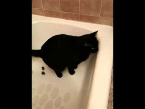 cat pooping in bathtub cat poops in bathtub youtube