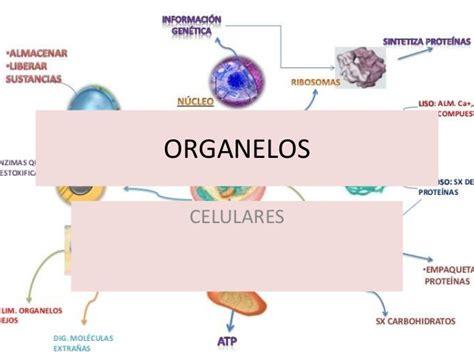 imagenes animadas groseras para celulares organelos celulares
