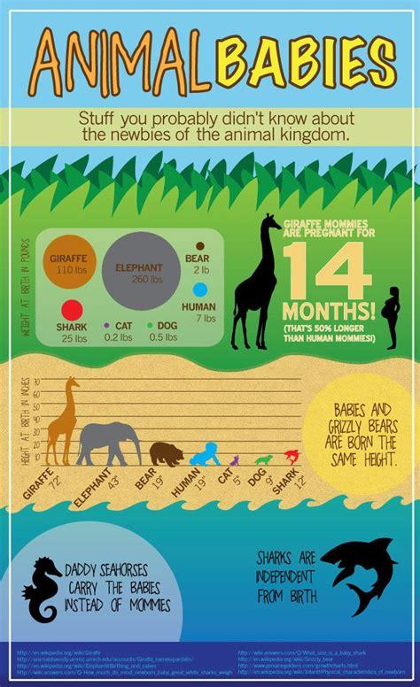 infographics animal kingdom 1848776543 20 best s14 infographics images on info graphics infographic and infographics