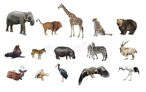 imagenes de unicornios salvajes un collage de animales salvajes imagen de archivo imagen