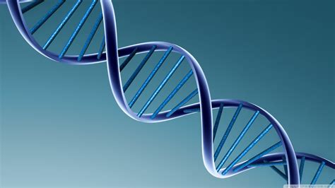 test genetica tests nutrigen 233 ticos 233 tica aplicada a la nutrici 243 n