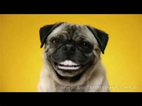 pedigree pugs pedigree doggie dentures comercial de tv propaganda pug