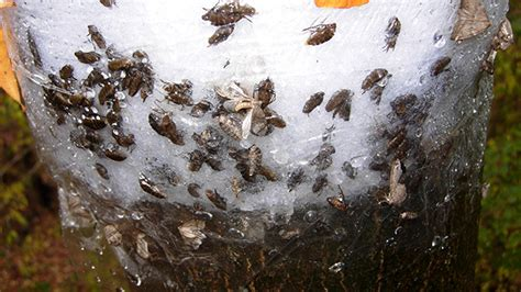 disgusting bugs infestation mississauga facing disgusting insect infestation