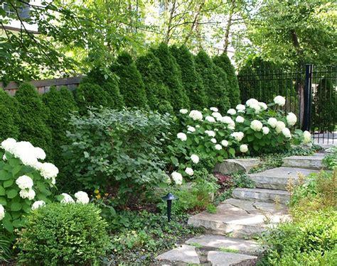 white hydrangeas path white