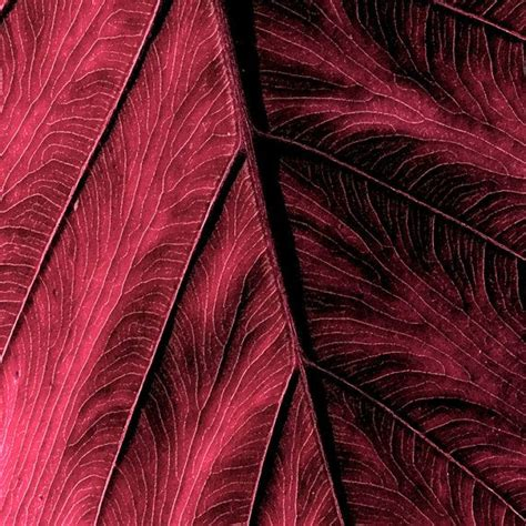 borgoa color 368 best images about color burgundy borgo 241 a on