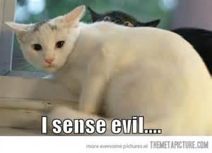 Funny Black Cat Memes - funny cats theferkel