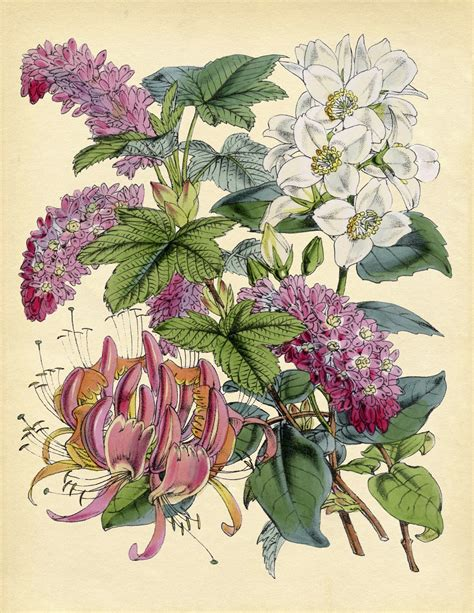 botanical print wallpaper instant art pink and white botanical printable the