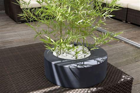 piante da vaso per esterni vaso x piante in resina zoe nicoli