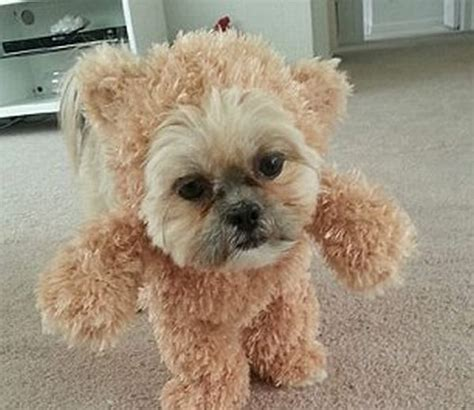 Is This A Dog Or A Teddy Bear   Animals